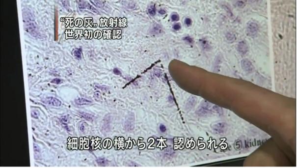 死の灰※スクリーンショット2009年8月7日NHK